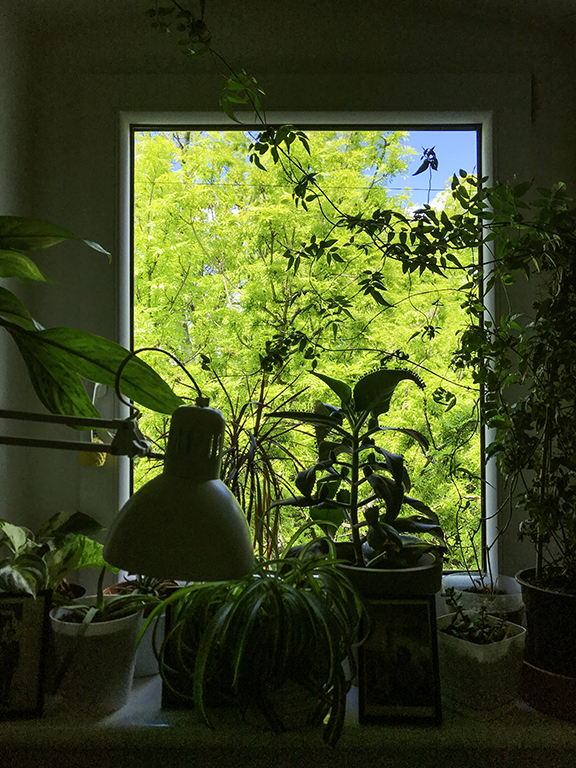 Remote office jungle